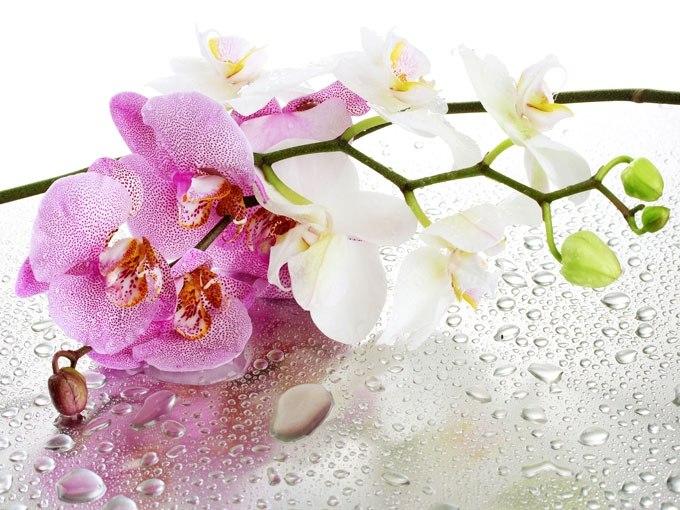 Цветна декорация за дома с картина орхидея