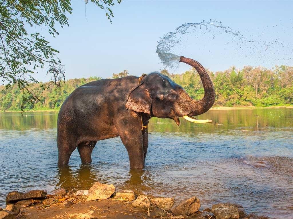 №1867, Величието на слона. Фото-картина.