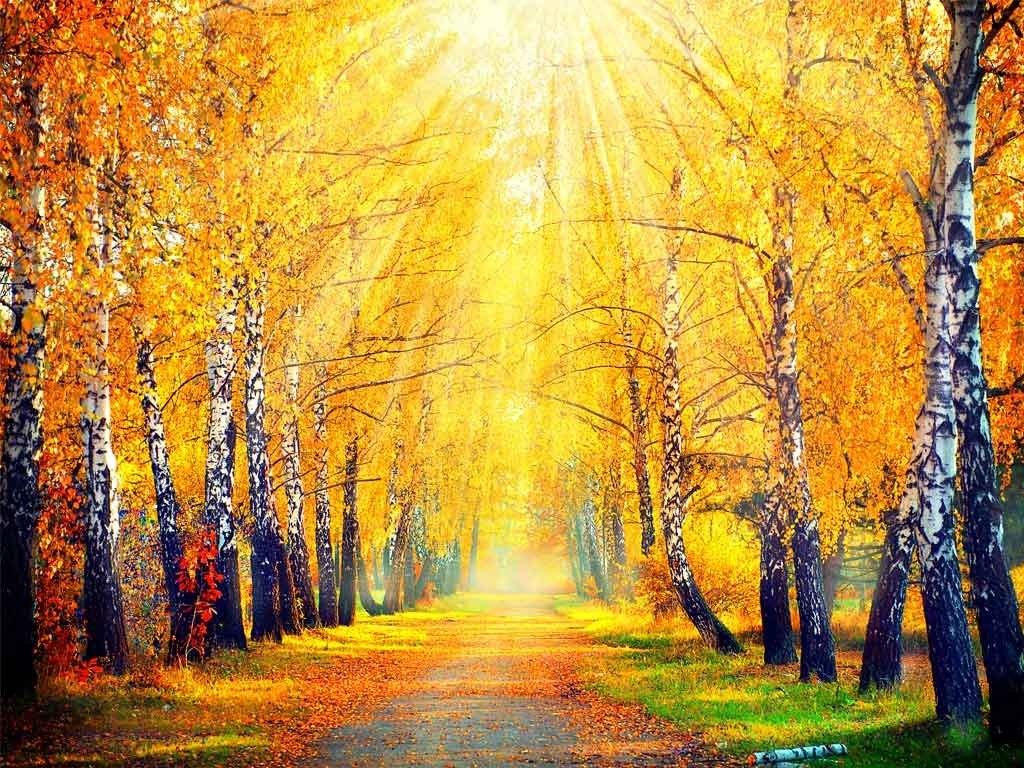 №1874, Слънчеви лъчи. Фото-картина.