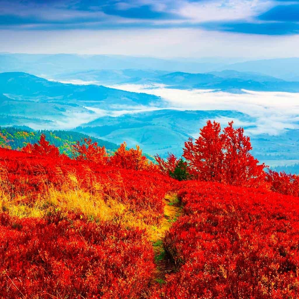 №1880, Започва есента. Фото-картина.