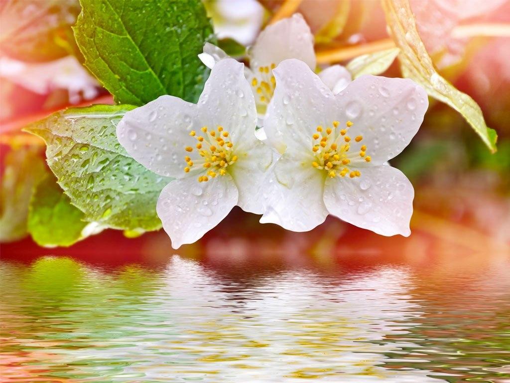 №1899, Пролетен цвят. Фото-картина.