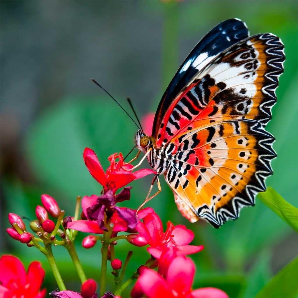№1903, Животът на пеперудата. Фото-картина.